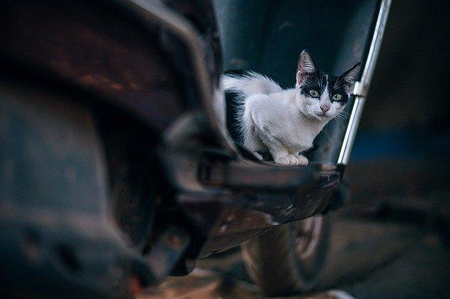 電車の線路の猫