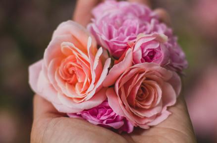 手のひらの上のバラ