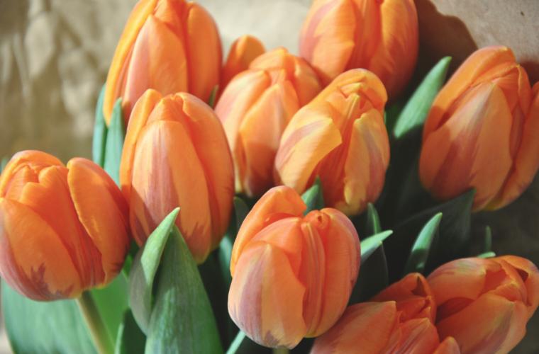 オレンジチューリップの花束