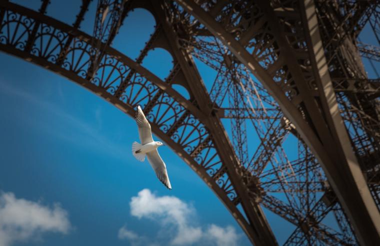 エッフェル塔と白い鳩