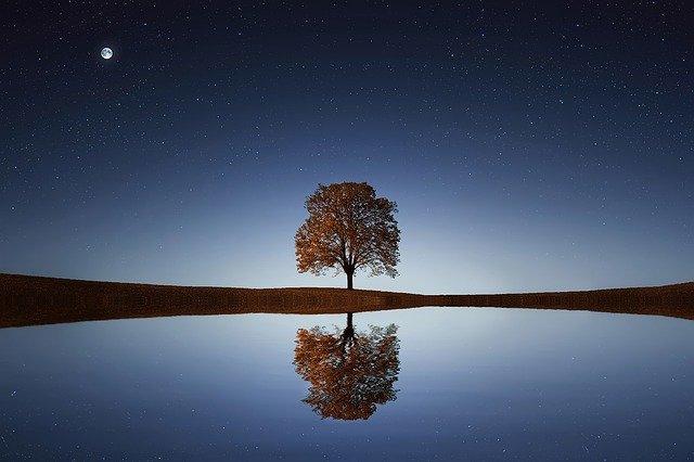 水面に映る木