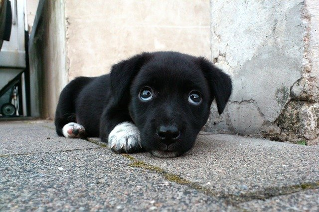 のんびりしている犬