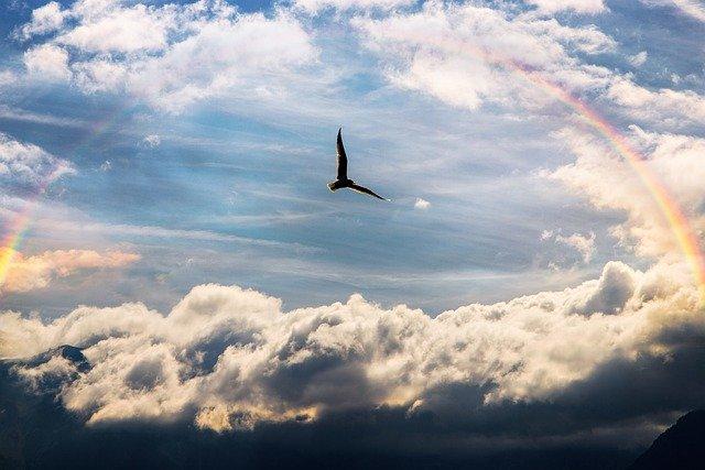 虹と空飛ぶカモメ