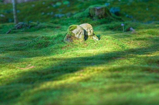 美しい芝生とブッダ