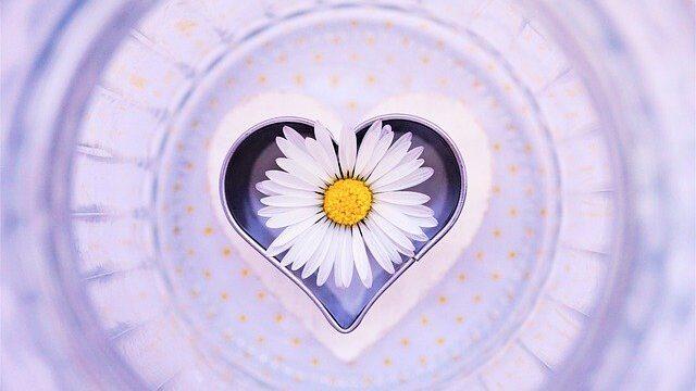 ハートの容器の中に入ったデイジーの花
