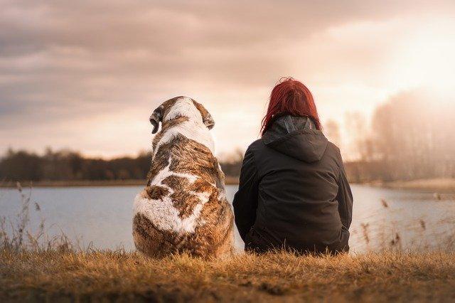 犬と湖の前で佇む少女