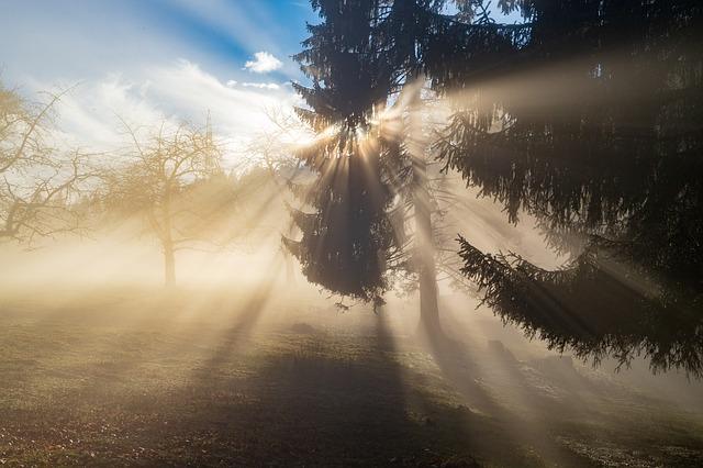 木々の隙間から漏れる陽の光