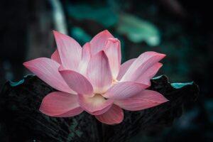 慈悲の瞑想とは?今すぐ幸せになれる優しさの瞑想法